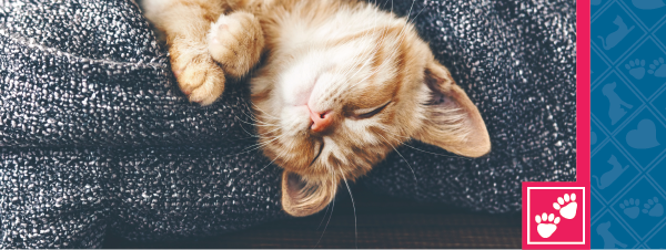 How to Have a Purr-fectly Happy Cat