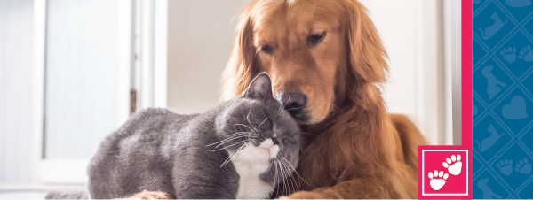 Is Your Pet Covered?